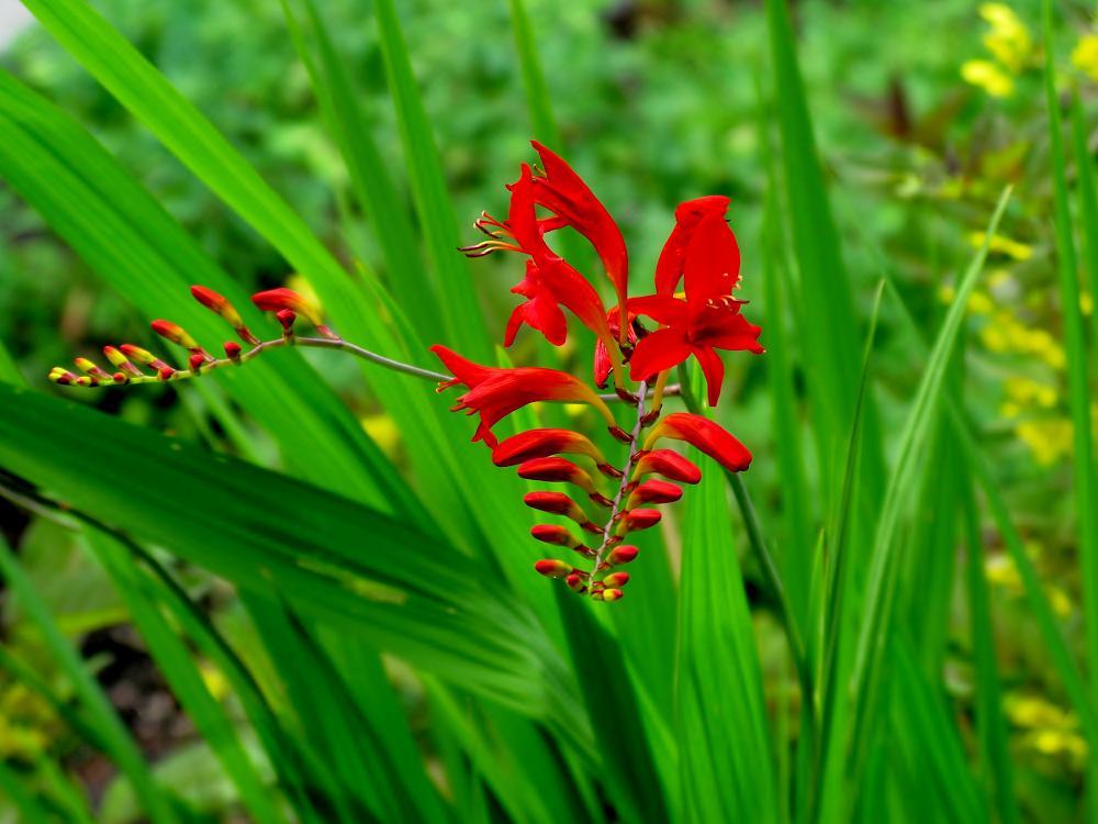 Fleurs qui attirent les colibris - Plante qui attire les moustiques ...