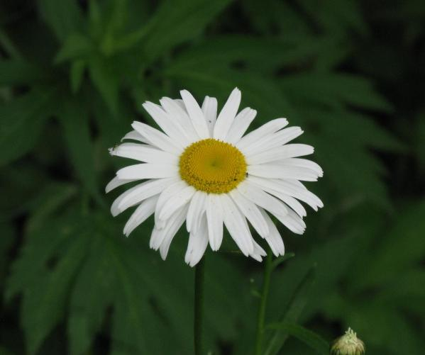 Marguerite 2014